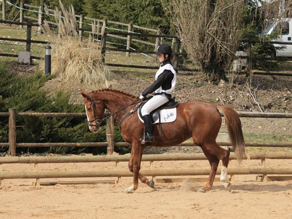 concours-dordogne-equitation