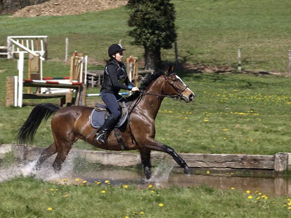 concours-dordogne-equitation2
