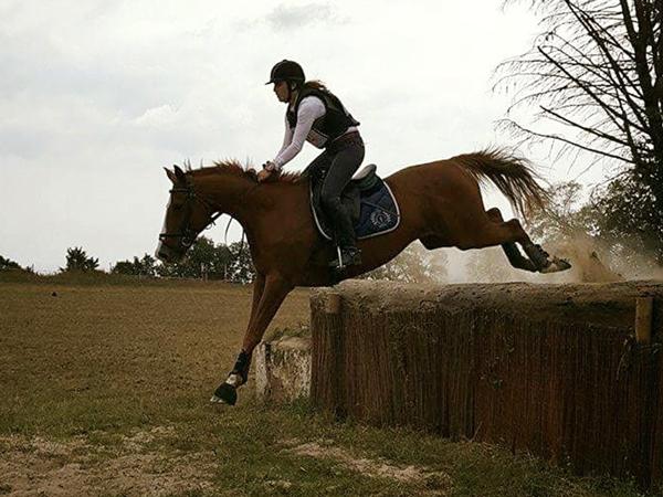 concours-dordogne-equitation3