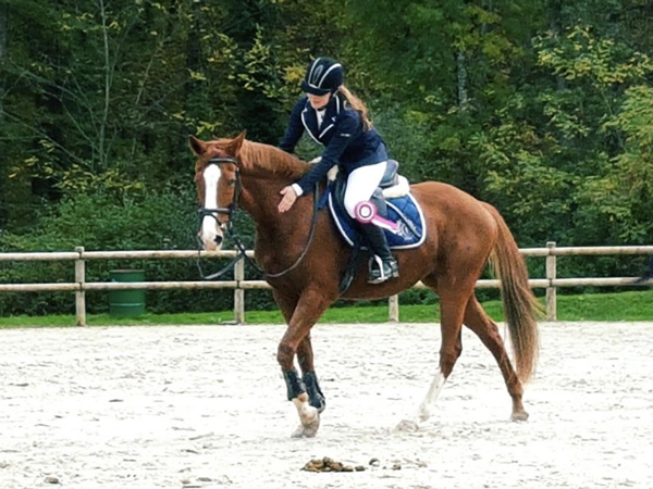 concours-dordogne-equitation5