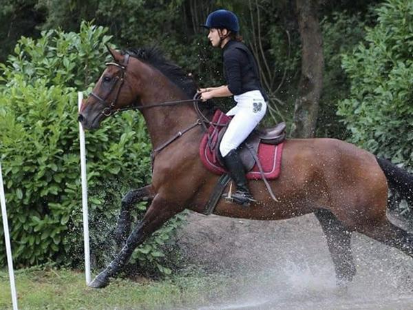 concours-dordogne-equitation6