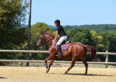 competition equitation dordogne